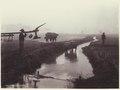 KITLV - 3744 - Kurkdjian - Soerabaja - Farmers with their buffaloes in the rice fields in Java - circa 1900.tif