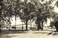 KITLV - 78294 - Kleingrothe, C.J. - Medan - Fermentation barn of the Amsterdam Deli Company near Medan, Sumatra at Padang Bulan - circa 1900.tif