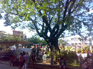 Malolos Cathedral - The Historical Kalayaan Tree