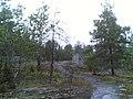 Kallio Maisema,Kontula - panoramio.jpg