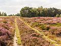 Karrenspoor door bloeiende heide. Locatie, Schaopedobbe (Schapenpoel) 01.jpg