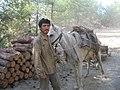 Kesilen odunlar atla taşınıyor - panoramio.jpg