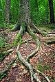 Kettle Creek Gorge Natural Area (4) (9235101992).jpg