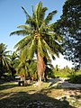 Kiribati(047).jpg