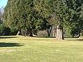 Kirschlorbeer und Mammutbäume - panoramio.jpg