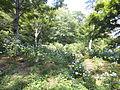 Kobe Municipal Arboretum in 2013-6-22 No,51.JPG