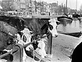 Koeien op een veemarkt in Amsterdam, Bestanddeelnr 189-0290.jpg