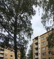 Koivikkotie, Maunula 04.png