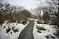 Korea-Snow in Mt. Deogyu-Stairway-01.jpg