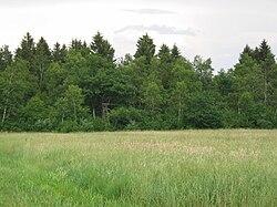 Kozlerjev--gozd.JPG