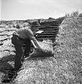 Krovec Slavko Štrumbelj, Mali Lipovec, pokriva streho na štali (hlevu) doma 1957 (2).jpg