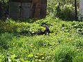 Kstovo-Goat-1392.jpg