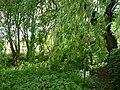 LSG OS 00021 Brennenheide 19.jpg