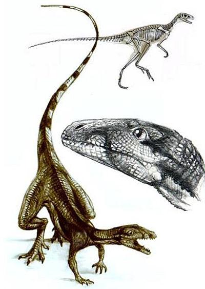 File:Lagosuchus.jpg