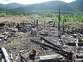 Laika ac Dneprovsky Gulag (6479419539).jpg