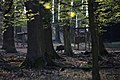 Lainzer Tiergarten März 2014 Bärenberg Wildschwein (Sus scrofa) 1.jpg