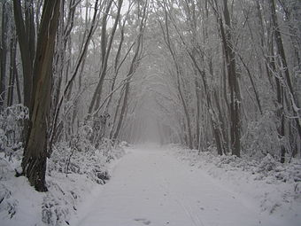 A trail at Lake Mountain cross country ski resort, Victoria. Lake-Mountain-trail.jpg