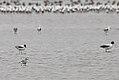 Lake Burrumbeet (24156872623).jpg