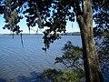 Lake Talquin SP lake04.jpg