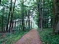 Landschaftsschutzgebiet Düingdorfer Berg Datei 28.jpg