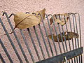 Leaves on a leaf rake.jpg