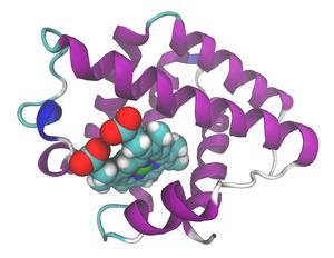 Leghemoglobin - Leghemoglobin from soybean.