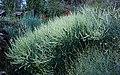Lentejuelas vegetales (43665523674).jpg
