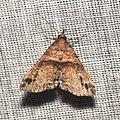 Lepidoptera (15890105360).jpg