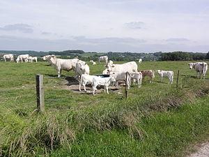 Les Autels - Countryside in Les Autels