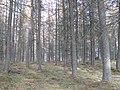 Letter Wood - geograph.org.uk - 603527.jpg