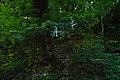 Light trails of fireflies.jpg
