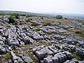 Limestone pavement, Holmepark Fell - geograph.org.uk - 28634.jpg