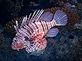 Lion Fish (46946763492).jpg