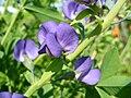 Littleflowers3.jpg