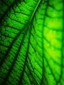 Living Leaf.jpg