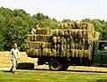 Loading hay.jpg
