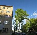 Lobnya, Moscow Oblast, Russia - panoramio (7).jpg