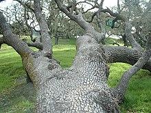 Lopez Lake Tree.jpg