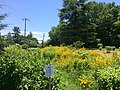 Lower Brandywine Presbyterian Church pollinator garden.jpg