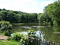 Loxley Fisheries Pond, Loxley Valley - geograph.org.uk - 1014767.jpg