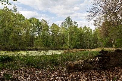 Münster, Wolbeck, Wolbecker Tiergarten, Naturwaldzelle -Teppes Viertel- -- 2014 -- 7087.jpg