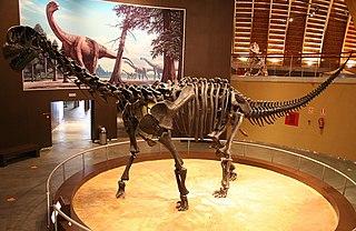 <i>Camarasaurus</i> Camarasaurid sauropod dinosaur genus from Late Jurassic Period