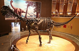 Camarasaurus - Mounted skeletal cast at the Jurassic Museum of Asturias