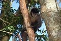 Macaco em Tibaji 190708 REFON 8.JPG