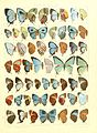 Macrolepidoptera15seit 0321.jpg