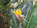 Madeira - Monte - Jardim Tropico (2093400958).jpg