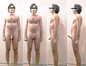 Male body erection study.jpg
