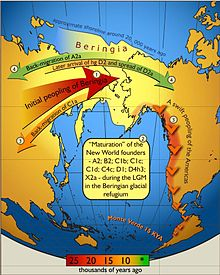 Schematic illustration of maternal geneflow in and out of Beringia.Colours of the arrows correspond to approximate timing of the events and are decoded in the coloured time-bar. The initial peopling of Berinigia (depicted in light yellow) was followed by a standstill after which the ancestors of indigenous Americans spread swiftly all over the New World while some of the Beringian maternal lineages–C1a-spread westwards. More recent (shown in green) genetic exchange is manifested by back-migration of A2a into Siberia and the spread of D2a into north-eastern America that post-dated the initial peopling of the New World.