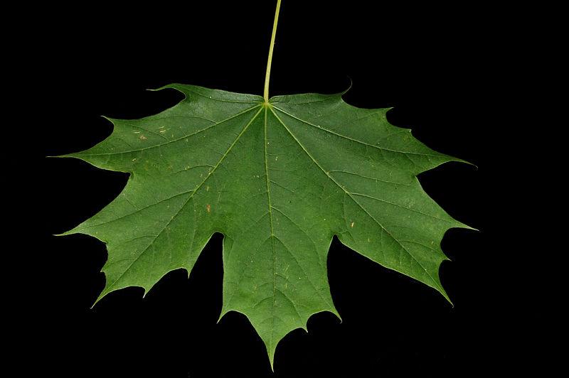 Nomlicious Agriculture And Politics Politics In Maple Sugar