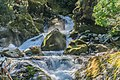 Marian Creek in Fiordland National Park 03.jpg